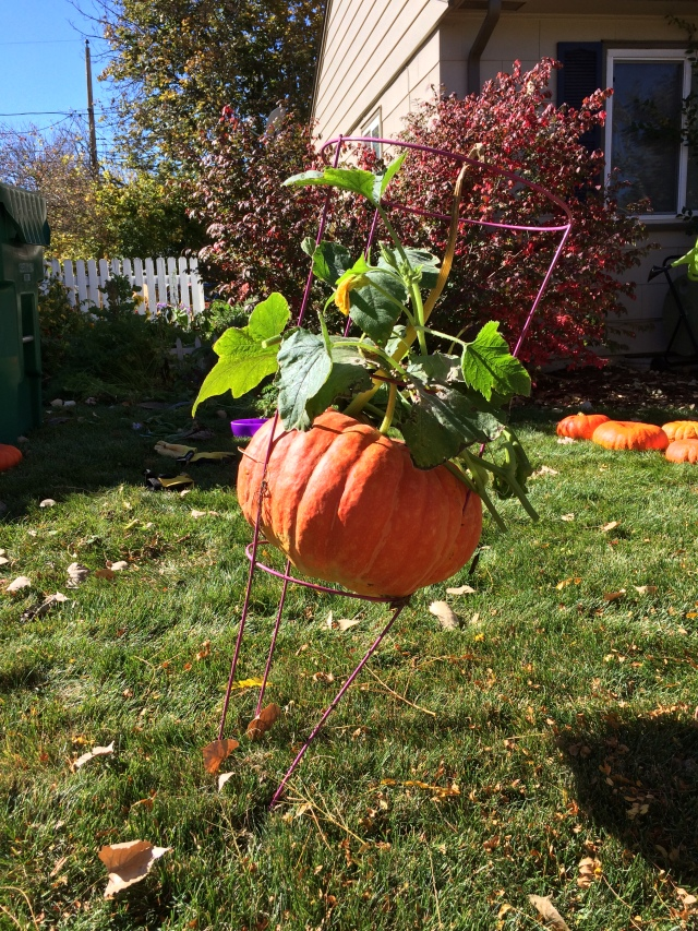 Image 6 - pumpkin in a cage